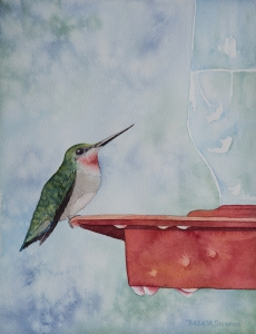 Humming Bird_web