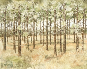 The Longleaf Forest