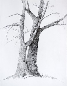 This image has an empty alt attribute; its file name is trees-drawing.jpg